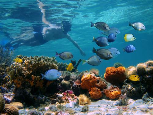 club jumbo coral sun beach ****